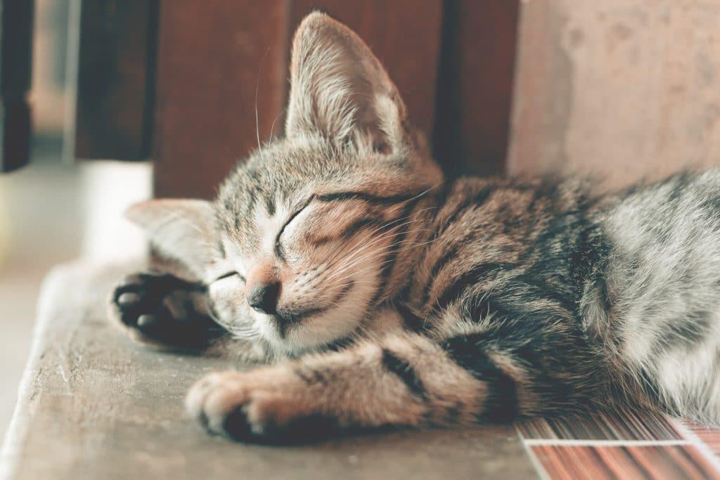 Gatito durmiendo_2